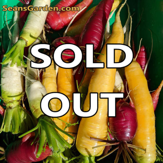 carrots sold out